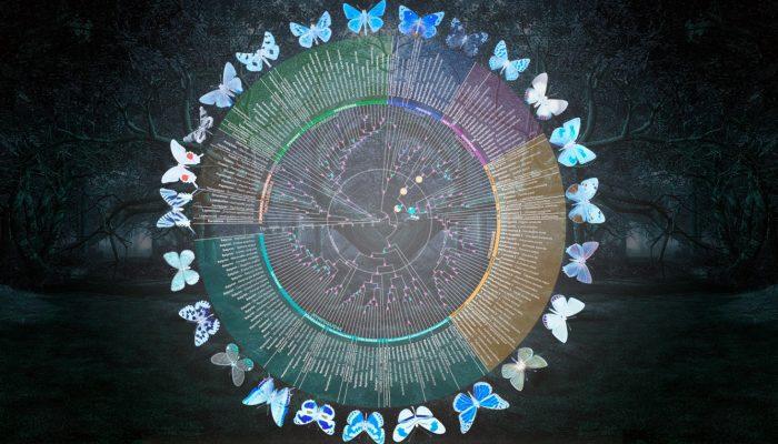 At last, butterflies get a bigger, better evolutionary tree. Fonte: https://www.floridamuseum.ufl.edu/science/at-last-butterflies-get-a-bigger-better-evolutionary-tree/